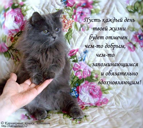Поздравления с днем рождения с котиком 32